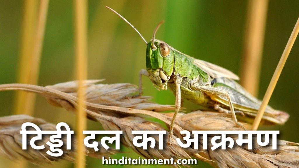 टिड्डी दल का आक्रमण, टिड्डी दल का फोटो, लोकस्ट, locust, locust meaning, locust attack, tiddi, pakistan locust, locust attack india, tiddi attack, locust swarms, locust swarm india, locust attack in india, pakistan locust attack, locust in pakistan, tiddi dal attack, locust outbreak, what is locust attack, locust infestation, tiddi image, locust attack in rajasthan, tiddi dal news